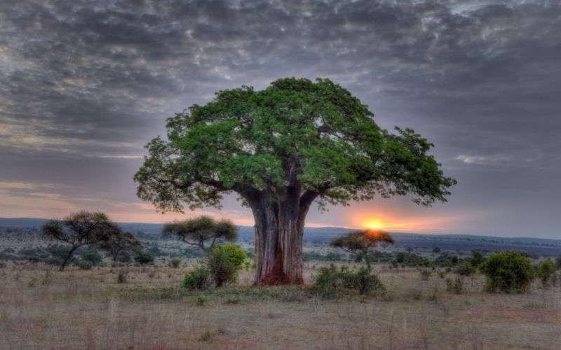 Tarangire-baobab-foto